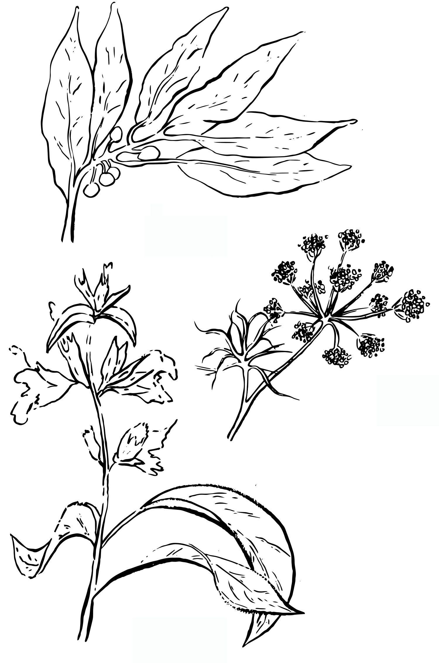 fleurs1-compressor